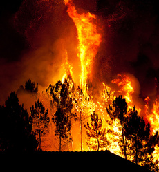 Emergency caused by Wildfires in the South-Central Chile